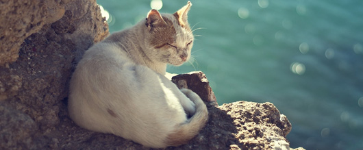 Cats can drink sea water to rehydrate