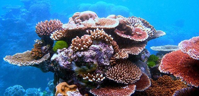 Human shit is responsible for the deterioration of coral reefs!