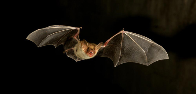 Of all mammals, bats have the highest rates of homosexuality!