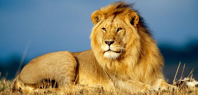 Le Symbolisme Chrétien - 19 eme siècle - Angleterre ( Images) Lion
