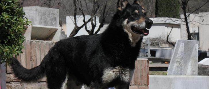 En Argentine, un chien dort sur la tombe de son maitre depuis 8 ans !