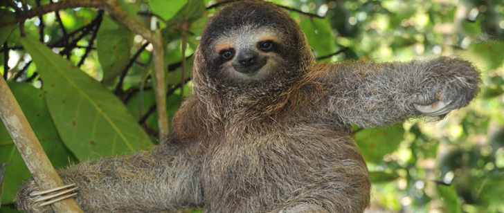 Sloths defecate only once a week!
