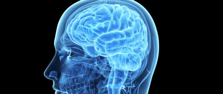 Notre cerveau a rétréci de 10% au cours des 30 000 dernières années !